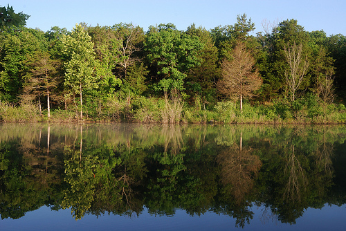 Multicolored trees are seen across the water of Big Bay inlet on Table Rock Lake.
