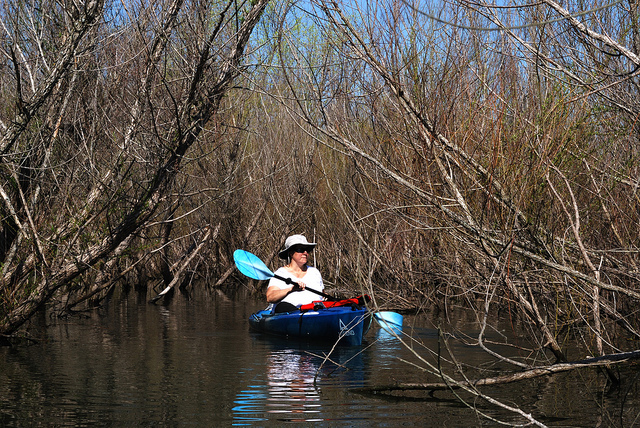Paddling among the willows in an Ascend D10 kayak on Fellows Lake in Springfield, Missouri.