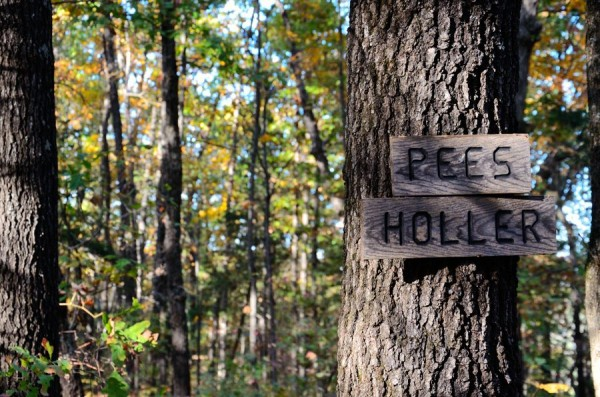 Hercules Glades Wilderness - Pees Hollow Trail