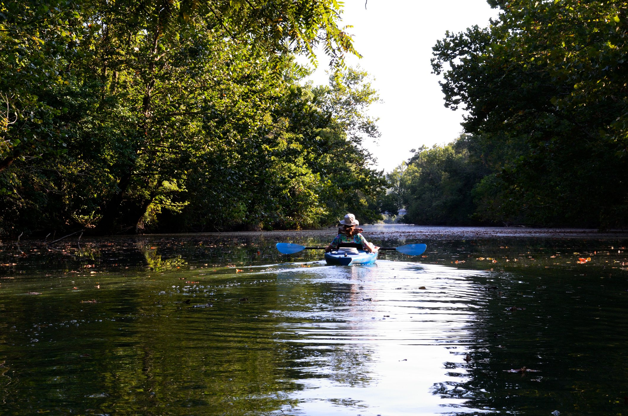 Late Afternoon Paddle on the James River Above Lake Springfield