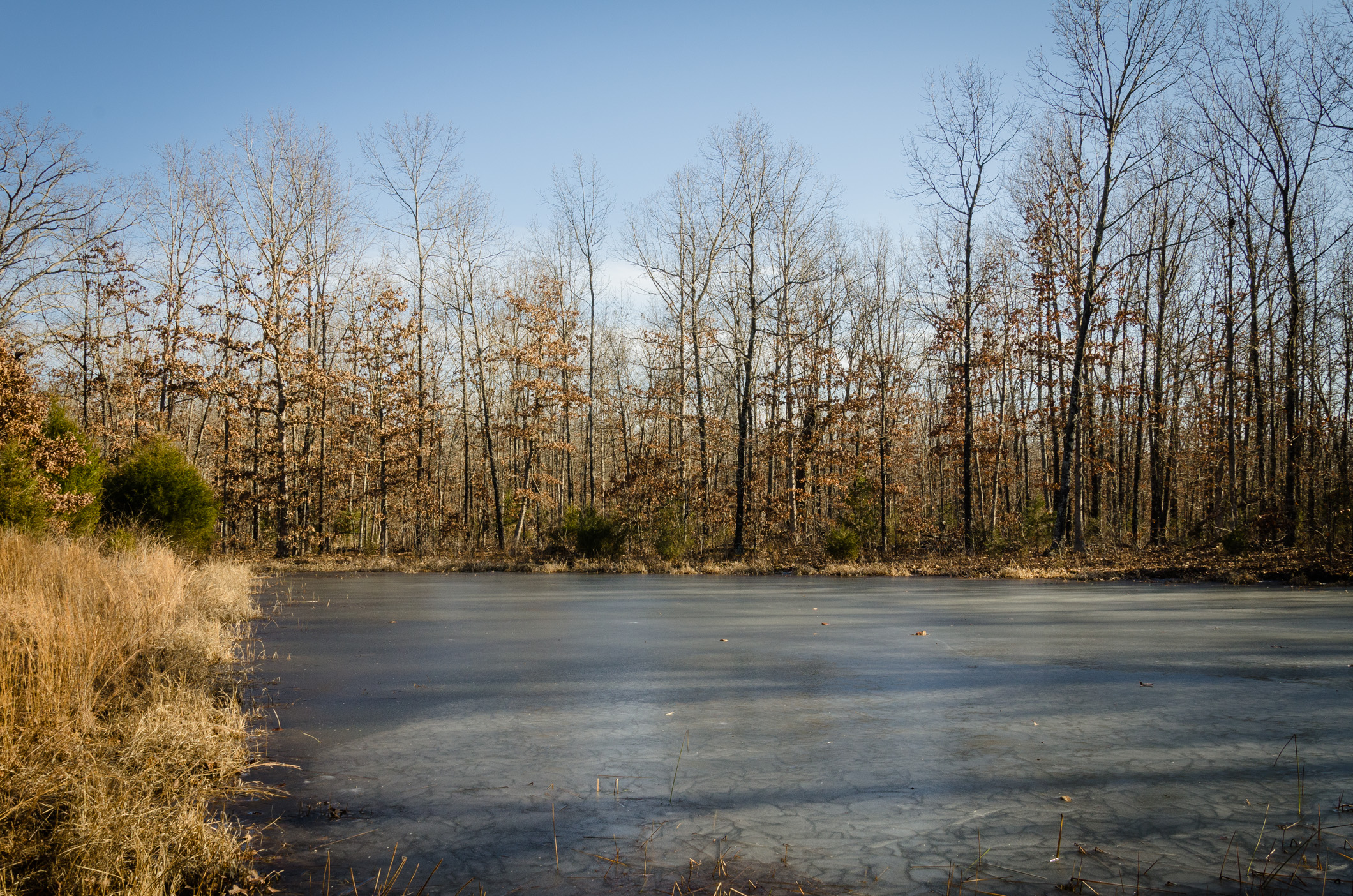 Stock pond -  Compton Hollow Conservation Area
