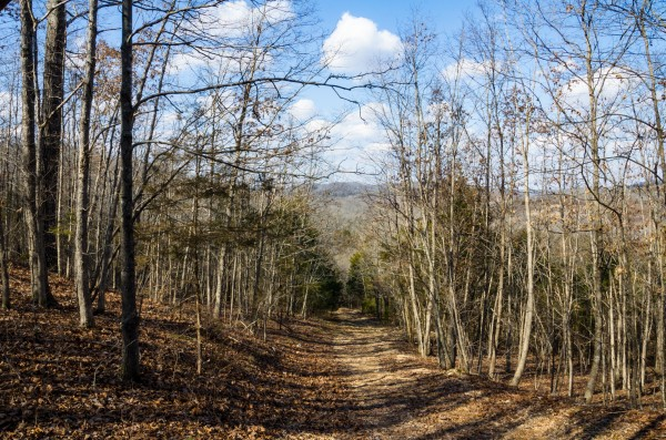 The Yellow Trail at Busiek State Forest
