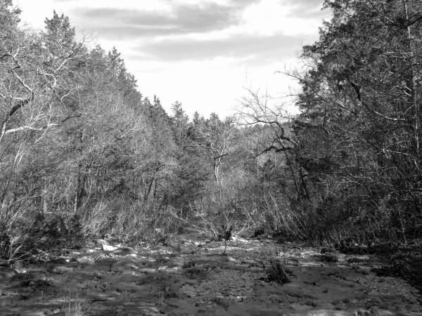 Looking East along 'Cab Creek'