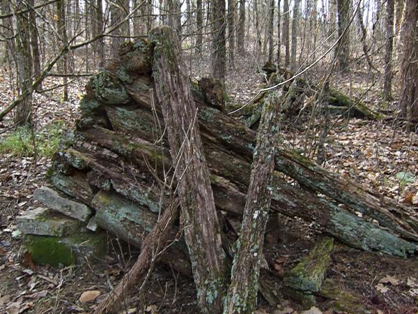 Old Log Cabin / Barn