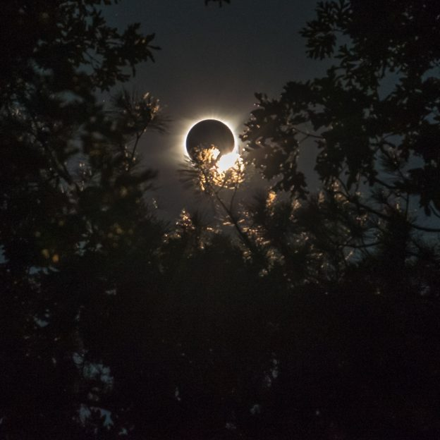 Photograph of the 2017 total solar eclipse seen through the trees of the Mark Twain National Forest near the Berryman / Ozark trail in MIssouri